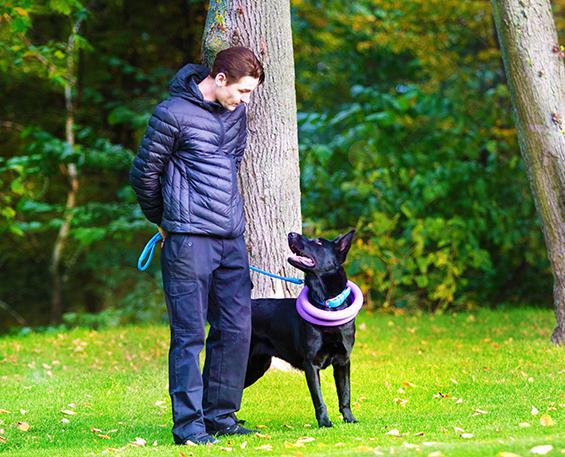 Вы думаете, что обучить можно только молодую собаку?